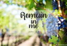 Vine and Branches meaning in the Bible