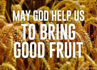 kingdom of God like a mustard seed